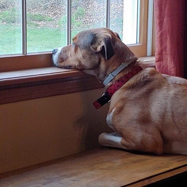 犬と室内で過ごすときのポイント!ストレスを感じさせないために