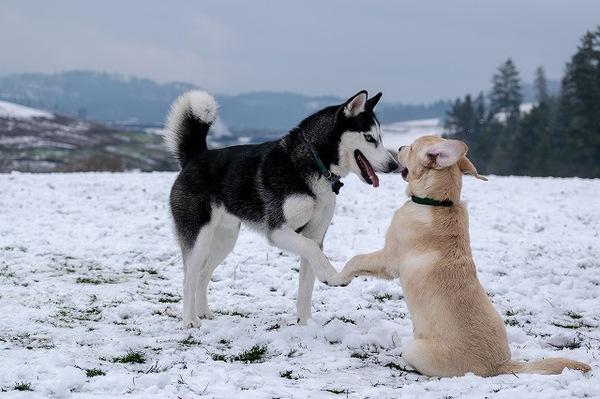 犬のかわいい仕草、前足でちょいちょいにはどんな意味があるの?