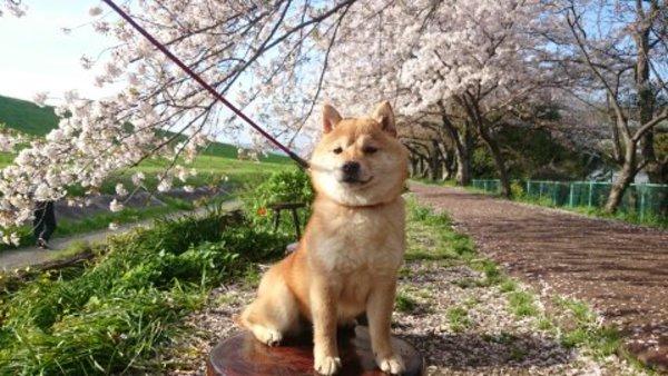 犬は春先にストレスを感じやすい?原因や対策は