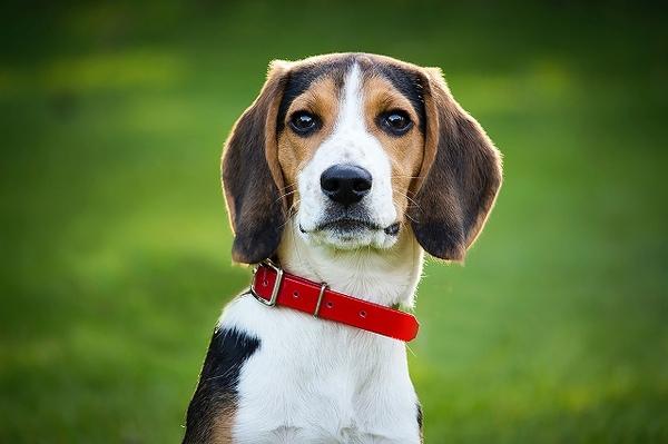 体調のバロメーター!犬の毛艶が悪いときの原因・対処法は