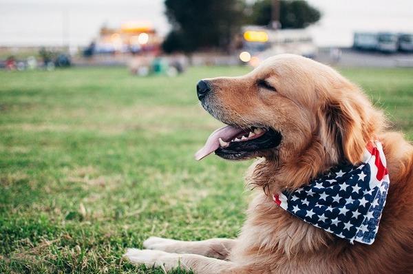 世界にはこんなに犬の法律がある!なかには飼い主の年齢制限も