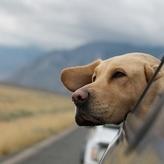 愛犬とGWを楽しく過ごす方法