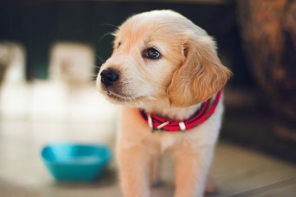 愛犬のための防災用品は何を揃えるべき?