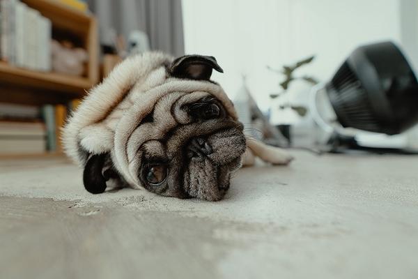 犬が肥満になるとどんなリスクがあるの