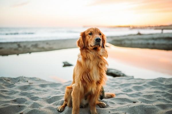 犬のマウンティングはやめさせるべき?