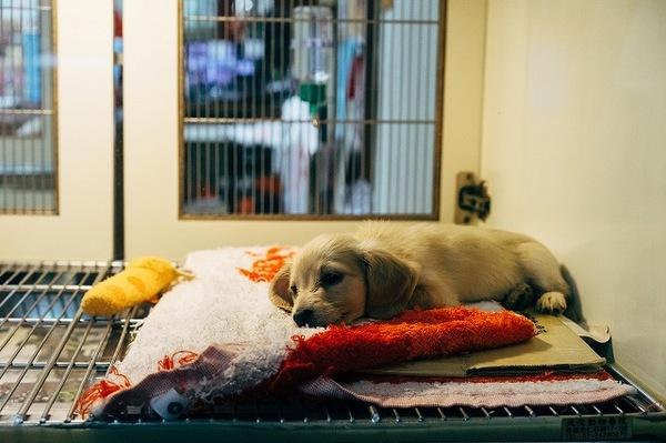 犬の動物病院嫌いを克服する方法