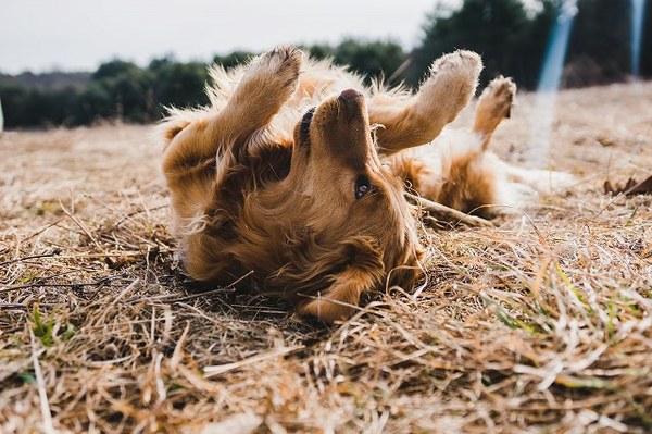 犬も夏バテするの?対策や気をつけるポイント