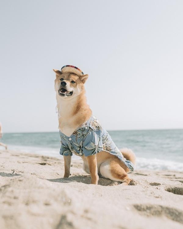 愛犬のお出かけ中の熱中症を防ぐ対策方法