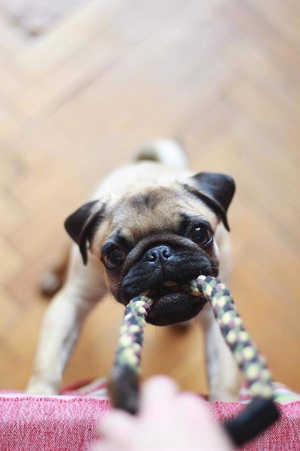 愛犬が飽きずに遊べるおもちゃ環境を整えてあげることも大切