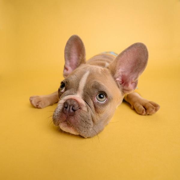 犬に話しかけるときは声のトーンに気をつけること