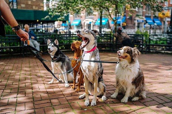犬が興味のある人、ない人を決める?意外な理由
