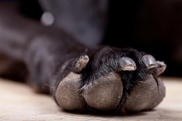 犬が爪切りを嫌がる時の対処法とは