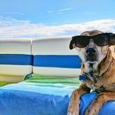 犬の夏バテサインを見逃さないで!