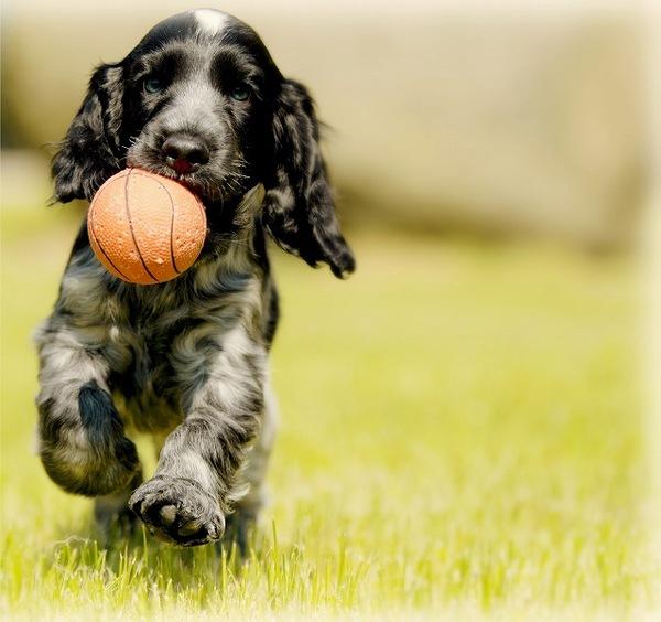 意外!犬が特定のおもちゃばかりで遊ぶのは理由があった