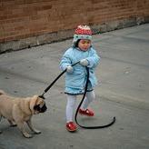 子犬がお散歩で歩きたがらない理由や原因