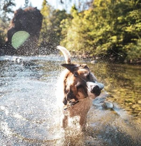 犬が水たまりに入るのはなぜ?どんな危険があるの?