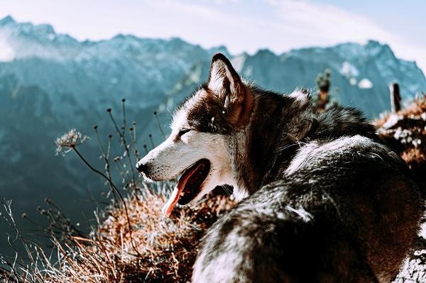 愛犬と一緒にトレッキングやハイキングで思い出を作ろう