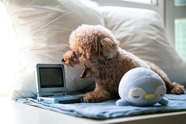 ペットが一人でお留守番をするときに寂しくさせないコツとは