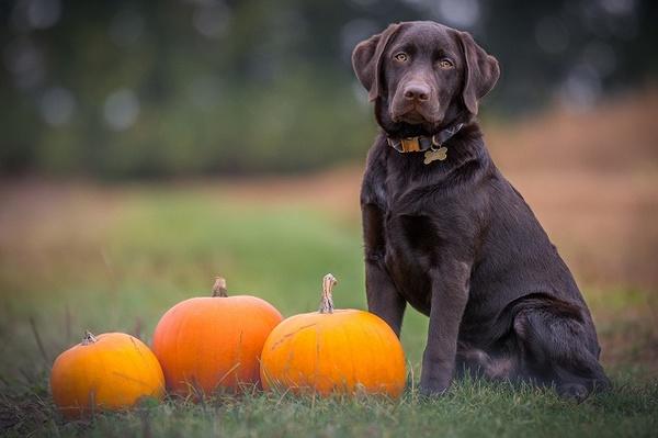 秋の味覚を愛犬と一緒に楽しむコツ