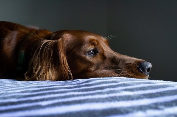 動物病院嫌いの犬の対処法とは