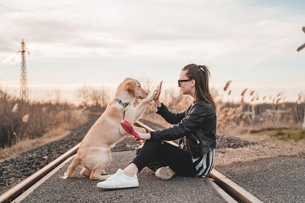 犬と電車に乗るときのルール(注意点)
